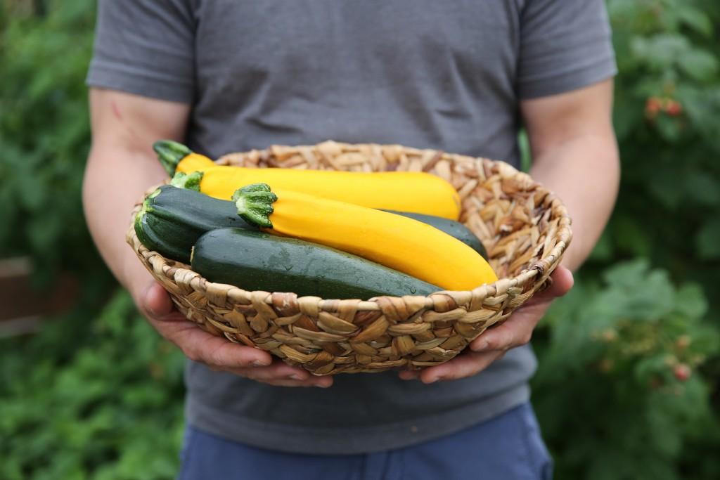 HarvestRight-zucchini 2